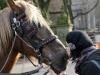 Annika schmust mit den Pferden am Central Park