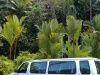 Big Island, Hilo, Botanischer Garten