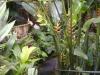 bei einem Spaziergang durch den Garten ist man von tropischer Vegetation eingehüllt