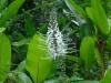 tropische Pflanze mit Wimpern