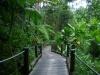 erste Eindrücke vom Hawaiian Tropical Botanical Garden