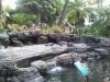 Camp Penguin im Hilton Hawaiian Village
