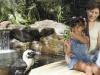 Camp Penguin im Hilton Hawaiian Village (copyright Hilton Hawaiian Village)