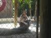die freundlichen Anwohner der Everglades