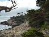 wilde Küste am 17-miles-scenic-Driveway