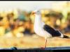 santa-monica-beach-u-pier