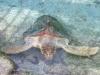 miami seaquarium schildkröte