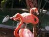 miami seaquarium flamingos