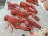lobster company - delikatesse mit tucken