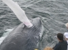 whale-watching-den-samften-riesen-so-nah