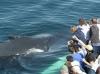 whale-watching-sie-sind-genauso-neugierig-wie-wir
