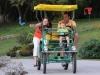Safari Cycle