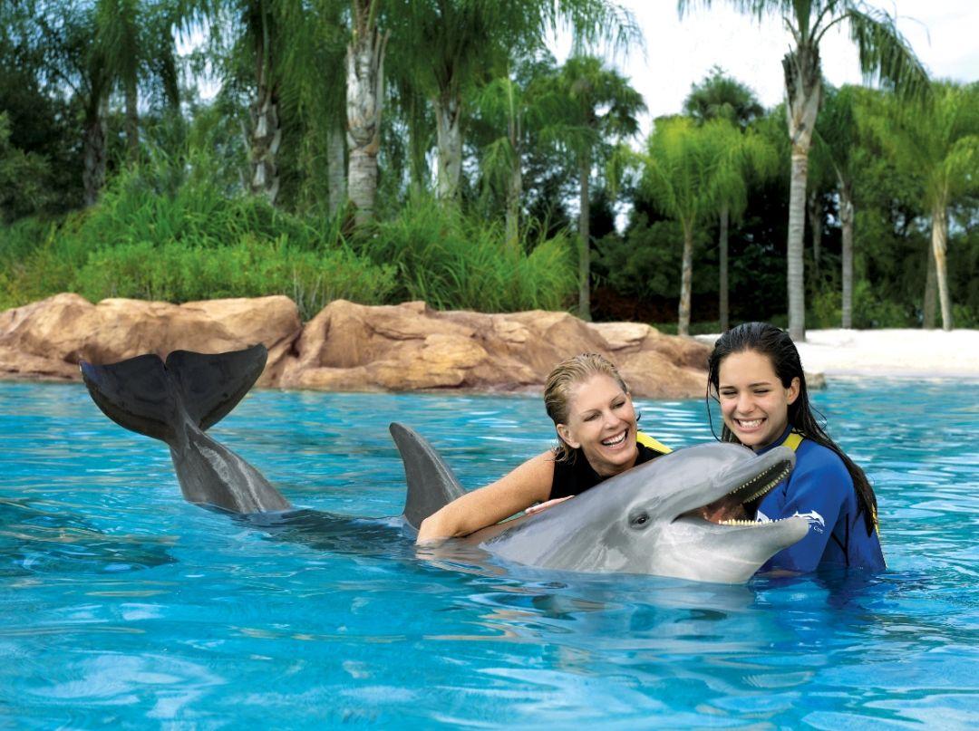 Sea World - Delphin Streichelzoo