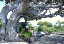 Städtchen Kona auf Big Island