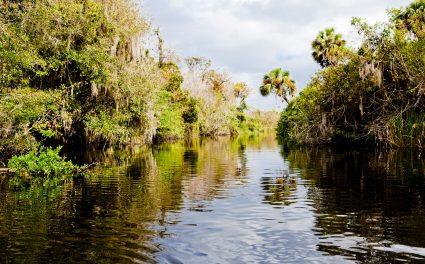 Tagesausflug Everglades – Flora und Fauna im Nationalpark erleben