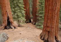 Sequoia and Kings Canyon Nationalpark