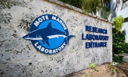 Meerestierwelt im Mote Marine Aquarium kennenlernen