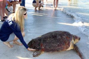 Turtle, Meeresschildkröte, Mote Marine Aquarium