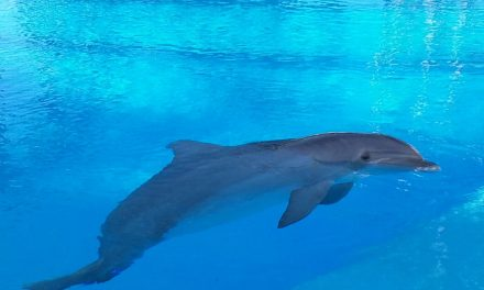Delfin Trainer in der Wüste sein