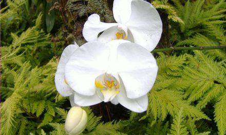 Das Paradise auf Erden – Hawaiian Tropical Botanical Garden in der Nähe von Hilo