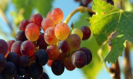 Geführte Tour zu den Weingütern nördlich von San Francisco mit CitySightseeing