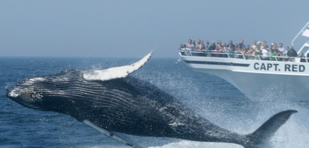 Whale Watching in Neuengland