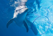 """Delfinmädchen und tierischer Hollywoodstar """"Winter"""""""
