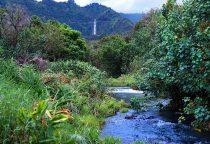 üppiger Regenwald und Wasserfälle