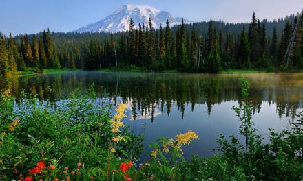 Wandern auf Vulkangestein – Mount Rainier National Park
