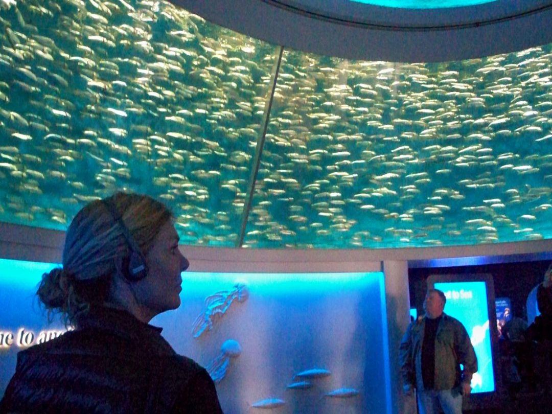 Fein Monterey Bay Aquarium Malvorlagen Fotos - Malvorlagen Von ...
