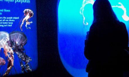 Das Fenster zum Pazifik – Monterey Bay Aquarium
