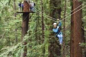 Zip Lining durch Mammutbäume (Santa Cruz County)