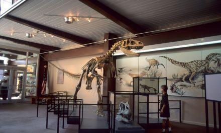 Reisen in die Urzeit – Dinosaurier in Utah