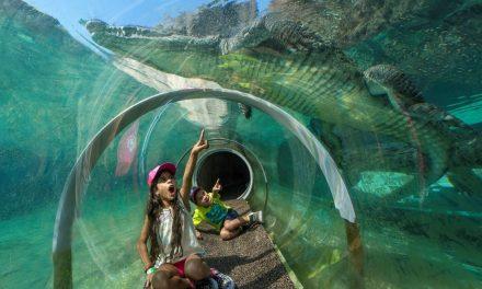 Zoo Miami – Tiere erobern die Herzen von Groß und Klein