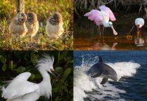 bunte Tierwelt Fort Myers