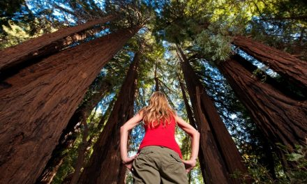Redwood Nationalpark im Westen der USA
