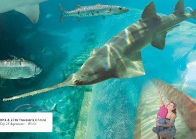 """der Predator Tunnel im Aquarium """"Marine Habitat"""""""