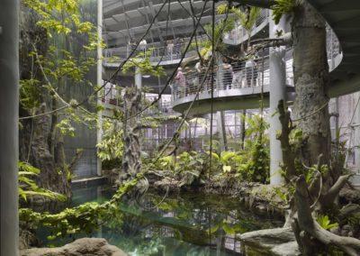 Regenwald - Impressionen