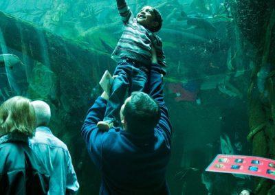 Aquarium - Faszination für Groß und Klein