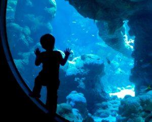 California Academy of Sciences, Aquarium