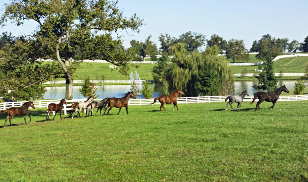 Pferde, Bourbon & Bluegrass: Kentucky