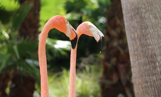 Der Natur auf der Spur in Sarasota, Florida