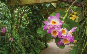 Marie Selby Botanical Garden