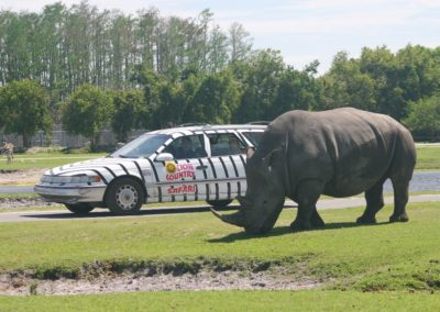 Nashorn im Lion Country Safari Park