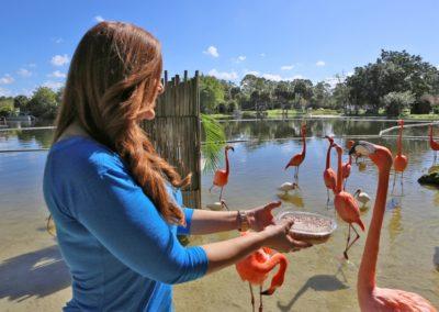Flamingos füttern