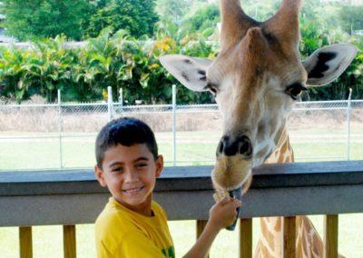 kleiner Mann ganz groß beim Giraffen füttern