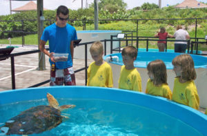 Loggerhead Marinelife Center, Juno Beach, Florida