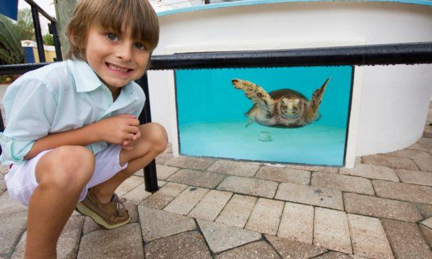 Tierische Begegnungen in The Palm Beaches in Florida